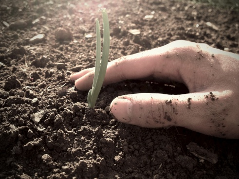 planting-in-soil