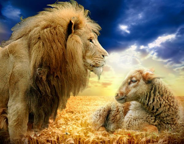 A51_LIon_AND_LAMB
